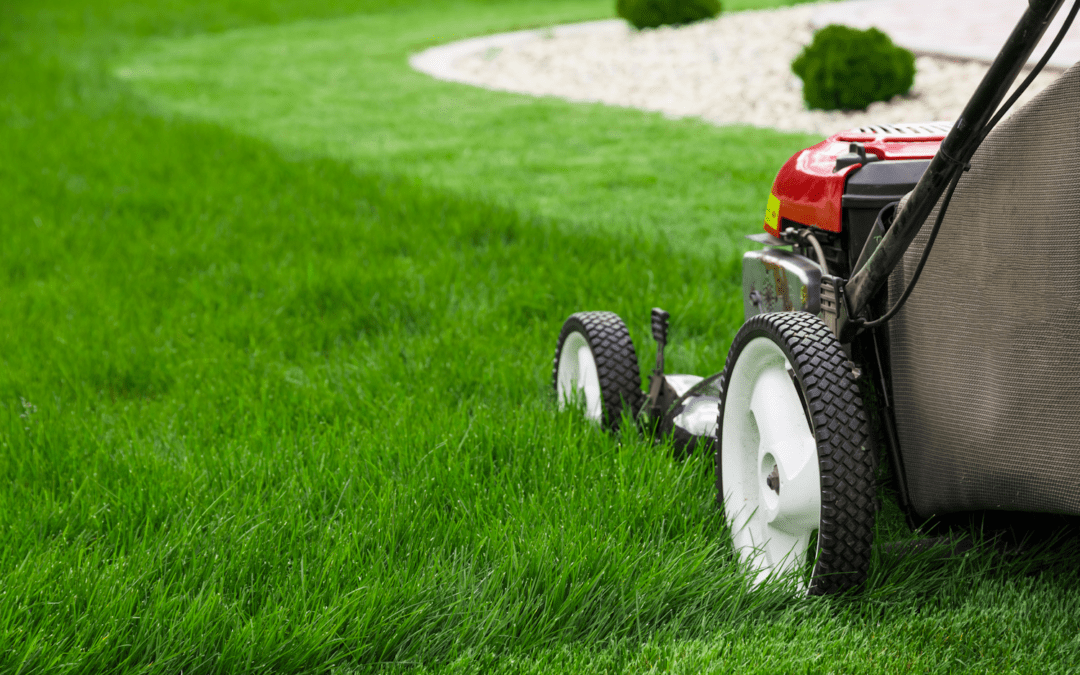 How short is too short for my lawn